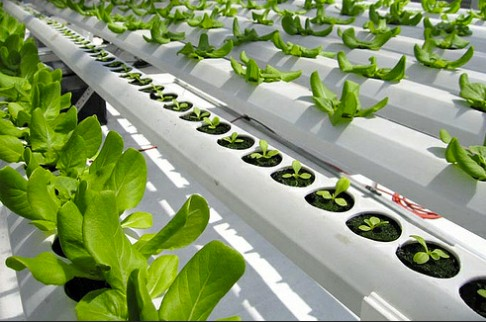 Oasis Grower Medium and the NFT Hydroponic Profile combined is the perfect way for you to grow your Hydroponic crops.